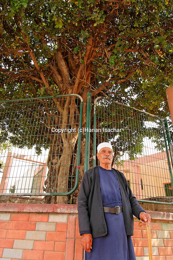 Israel, the Upper Galilee. A Druze elder by the Carob tree in Kisra