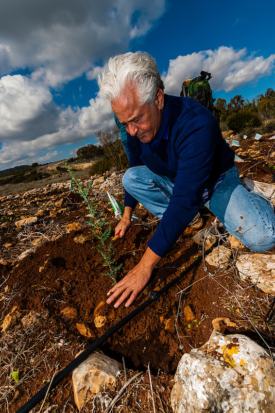 Keren Kayemeth Leisrael Planting Center in the Lavi Forest (the Jewish National Fund has planted over 240 million trees in the country since 1901), Israel.