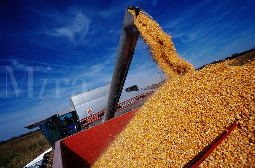 A combine harvester shoots tons of just harvested corn into a grain wagon destined for market. Missouri.