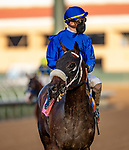 AUG 08: Dr. Schivel with Juan Hernandez aboard breaks his maiden at Del Mar Thoroughbred Club in Del Mar, California on August 02, 2020. Evers/Eclipse Sportswire/CSM