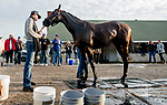 LOUISVILLE, KENTUCKY - APRIL 27: Omaha Beach, trained by Richard Mandella, gets a bath after exercising in preparation for the Kentucky Derby Scott Serio/Eclipse Sportswire/CSM