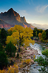 The Watchman over Cottonwood tree in fall along the Virgin River, Zion National Park, Utah