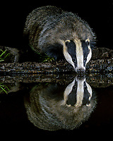 Wild reflections - The stunning images Alan Forder captured from his homemade hide.