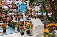 Mexico, Mexico, Morelos,Tepoztlan. Day of the Dead, Dia de los Muertos, decorations in graveyard.