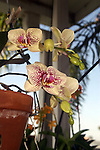 Orchids provide long lasting vibrant color.
