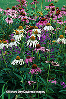 63821-09114 Purple & White Swan Coneflowers & Morden Pink Lythrum  Marion Co. IL