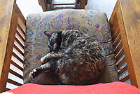 NWA Democrat-Gazette/FLIP PUTTHOFF <br />TC, champion mouser, lives by the motto all cats do: Eat. Sleep. Repeat.