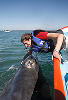 "pr7138-D. Gray Whale (Eschrichtius robustus), playful calf interacts with happy tourist (model released). Here baby whale ""sneezing""... actually exhaling, drenching woman! San Ignacio Lagoon, Baja, Mexico. .Photo Copyright © Brandon Cole. All rights reserved worldwide.  www.brandoncole.com..This photo is NOT free. It is NOT in the public domain. This photo is a Copyrighted Work, registered with the US Copyright Office. .Rights to reproduction of photograph granted only upon payment in full of agreed upon licensing fee. Any use of this photo prior to such payment is an infringement of copyright and punishable by fines up to  $150,000 USD...Brandon Cole.MARINE PHOTOGRAPHY.http://www.brandoncole.com.email: brandoncole@msn.com.4917 N. Boeing Rd..Spokane Valley, WA  99206  USA.tel: 509-535-3489"
