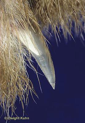 MA02-003x  Rabbit - nail, foot  close-up