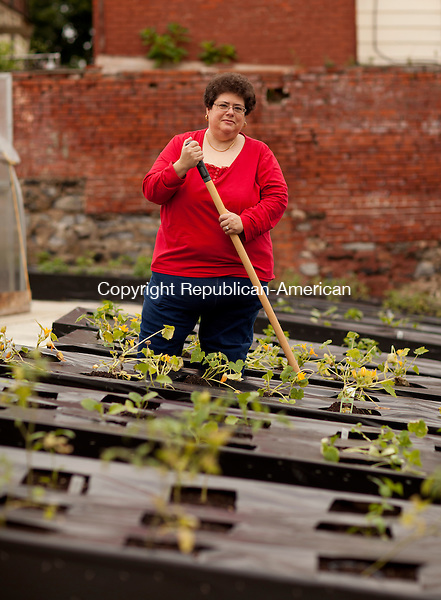 WATERBURY, CT-14 June 2013-061413BF01-  Sue Pronovost, Executive Director of the Brass City Harvest works in one of the raised garden beds at the organization's South End Greenhouse on Mill Street in Waterbury. Bob Falcetti Republican-American