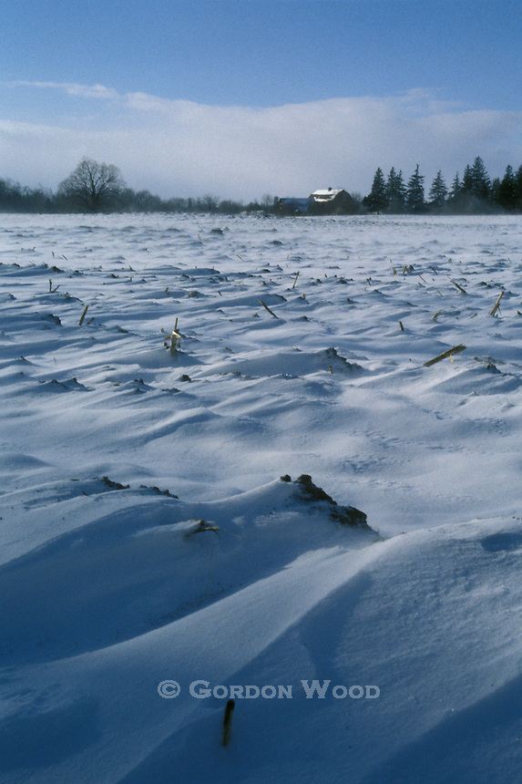 Snow Covered Cornfield in Winter with Farm in background