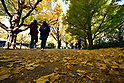 Ginkgo trees along promenade leading to Meiji Memorial Picture Gallery