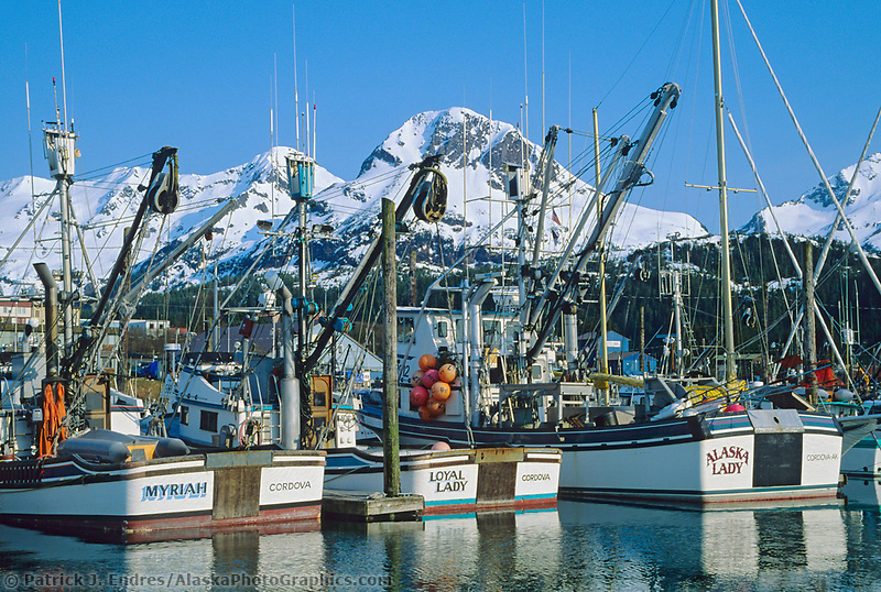 Purse seine fishing boats, Cordova harbor, Alaska.