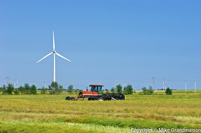 Swathing canola and wind turbine<br /> Somerset<br /> Manitoba<br /> Canada