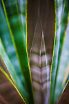 close up of stripes on desert plant