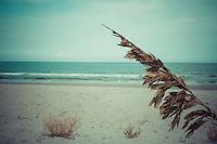 The Vintage Beach