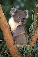 Australia-Pacific-FAUNA-animals