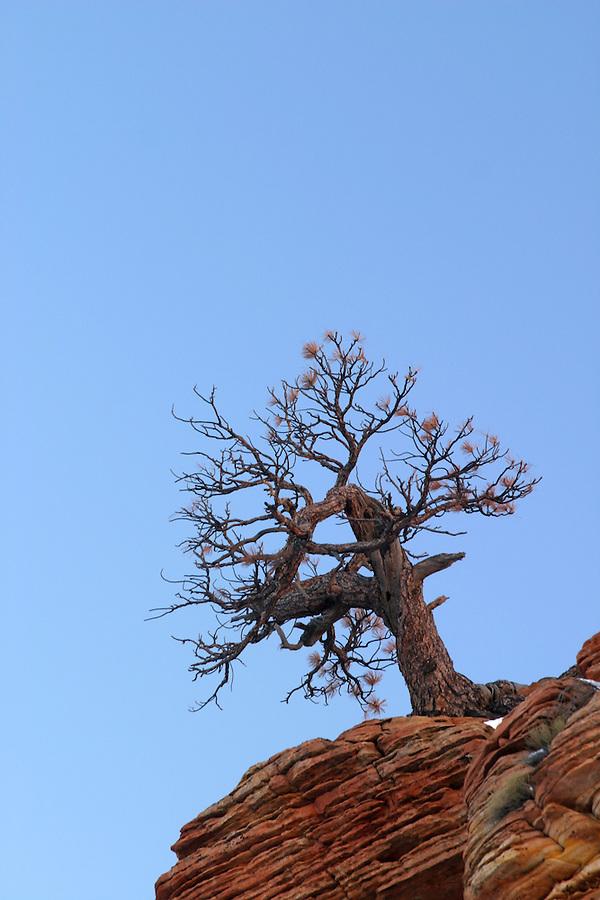 Tree on clifftop against blue sky, Zion National Park, Washington County, UT