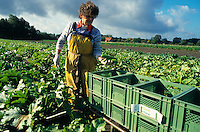 Europa Deutschland DEU <br />