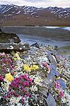 Sheenjek River region, Arctic National Wildlife Refuge, Alaska