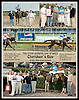 Cherokee's Boy winning The DTHA Owner's Day Stakes at Delaware Park on 9/9/06