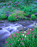 Mount Ranier National Park, WA<br /> Pink monkey-flower, lupine, groundsel, and valerian blooming  along the flowing waters of the Paradise River