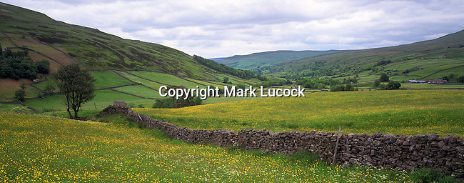 Stone wall and buttercups near Muker, Swaledale, Yorkshire