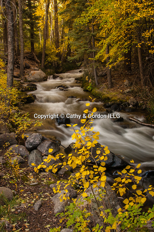 Fall color on Crestone Creek, Sangre de Cristo Mountains, CO.