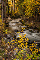 Fall color on Crestone Creek, Sangre de Cristo Mountains, CO.