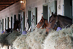 Horses in the barns at Oaklawn 1-11-13. (Justin Manning/Eclipse Sportswire)