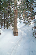 Fresh snowshoe tracks on Starr King Trail in the White Mountains, New Hampshire USA