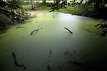 Eutrophication of pond as a result of run off of nitrate fertiliser from the surrounding fields, Sutton, Suffolk, England