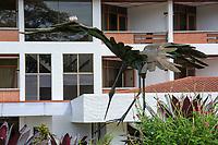 Three fledgling Inca Doves, Columbina inca, perch on a sculpture of a heron in the gardens of the Hotel Bougainvillea, Santo Domingo de Heredia, Costa Rica