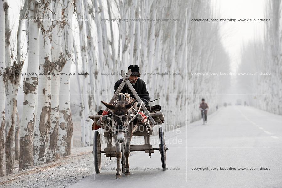 CHINA province Xinjiang uighur villages around city Kashgar where uyghur people are living / CHINA, autonome Provinz Xinjiang, uigurische Doerfer bei Stadt Kashgar hier lebt das Turkvolk der Uiguren , Farmer faehrt auf einer fuer die Region typischen Pappelallee im Winter mit einem Eselskarren zum Markt
