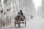 Asien CHINA Provinz Xinjiang uigurische Doerfer bei Stadt Kashgar hier lebt das Turkvolk der Uiguren , Farmer faehrt auf einer fuer die region typischen Pappelallee mit Eselskarren zum Markt  | <br /> Asia CHINA province Xinjiang uighur villages around city Kashgar where uyghur people are living