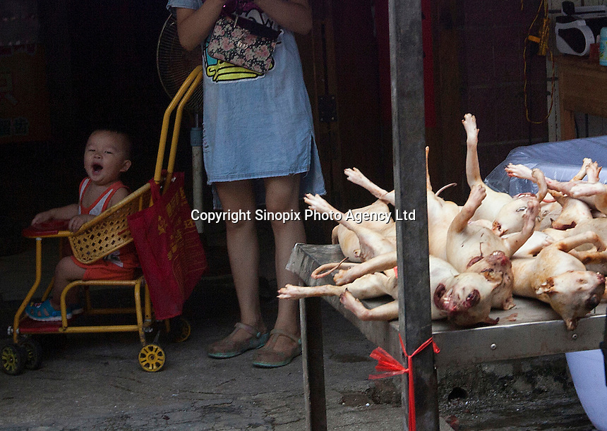 Roasted dogs are seen for sale in Yulin, one day before the Yulin Dog Meat Festival kicks off, Yulin, Guangxi Province, China, 20 June 2016.<br /> <br /> photo by str/Sinopix