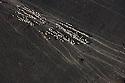 Kenya, Rift Valley, Rendille tribesman herding goats across Chalbi Desert towards oasis.