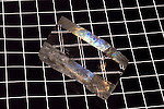 Feature: Calcite - Double Refraction