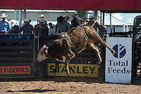 169 Lied To of Arianna Floyd/ Boyd-Floyd during the American Bucking Bull, Incorporated event in Decatur, TX - 6.3.2016. Photo by Christopher Thompson