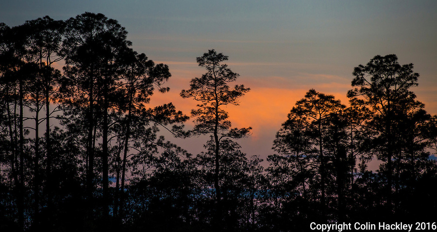 CLIO, FLA. 5/29/16-Sunset-colored clouds as seen through the pines of the Apalachicola National Forest.<br /> <br /> COLIN HACKLEY PHOTO