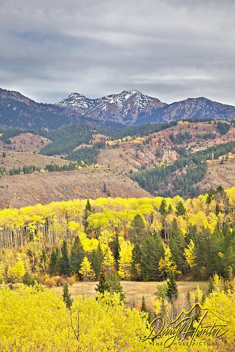 Fall colors,  Snake River Range, Swan Valley, Idaho