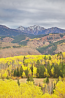 Fall colors,  Snake River Range, Swan Valley, Idaho