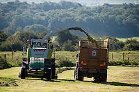 Forage harvesting grass, Waddington, Lancashire.