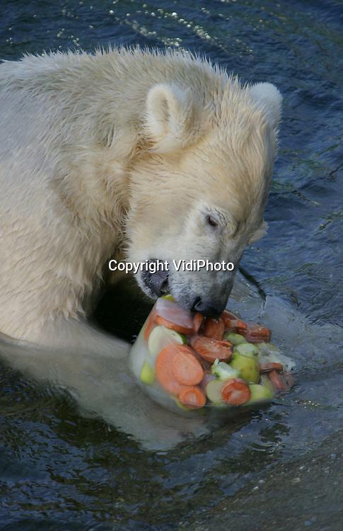 Foto: VidiPhoto..RHENEN - Groot feest in Ouwehands Dierenpark in Rhenen zaterdag. Het ijsbeertje Sprintertje werd precies één jaar. In aanwezigheid van tientallen kinderen en volwassenen kreeg het diertje een gezonde ijstaart en mocht Sprintertje in het water een ook andere cadeau 'uitpakken.'