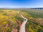 A dirt road through the colorful spring wildflowers from a DJI drone, Carrizo Plain, San Luis Obispo County, Calif.