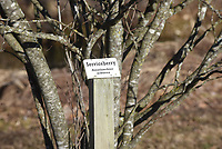 Signs inform visitors what    February 2020    kind of tree they're seeing.<br />