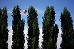 Hot air balloons in flight seen through gaps in a stand of popular trees.