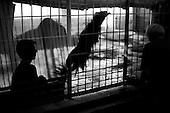 Wroclaw, Poland, April 4, 2009:<br /> Visitors watching orangutan named Tumku, at the .Wroclaw Zoo.(Photo by Piotr Malecki / Napo Images)..Orangutan Tumku i odwiedzajacy go ludzie w Zoo..Wroclaw, Kwiecien 2009.Fot: Piotr Malecki / Napo Images