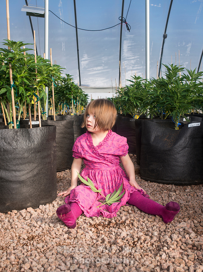 Charlotte Figi (cq, age 7) at the farm the grows the Charlotte's Web strain of marijuana in Colorado Springs, Colorado, Thursday, February 6, 2013. Charlotte suffered from over 100 seizure like symptoms and epilepsy before discovering a strain of marijuana that would stop her seizures. <br /> <br /> Photo by Matt Nager
