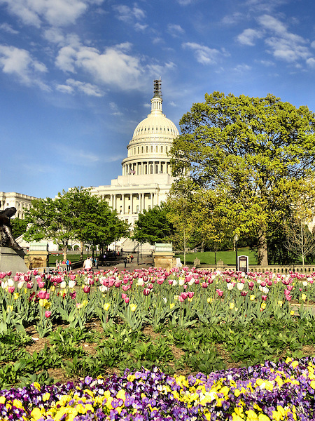 Spring in the Capitol